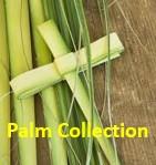 , Palm Collection, St. Joseph-on-Carrollton Manor Catholic Church, St. Joseph-on-Carrollton Manor Catholic Church
